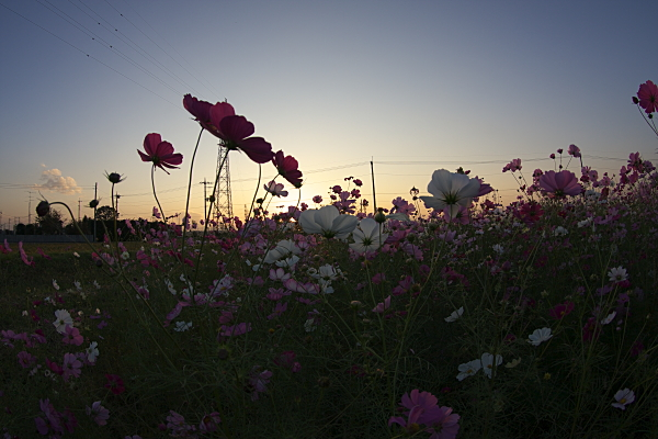 sunset_1851.jpg