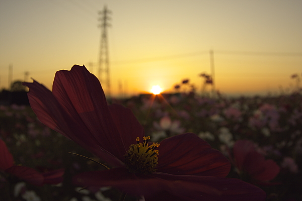 sunset_1858.jpg