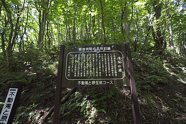 tatuzawa_5129.jpg