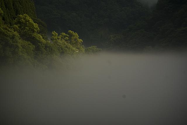 hayatokawakiri