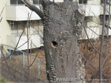 120312-4枯木