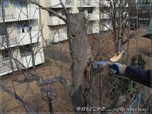 120312-3枯木