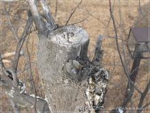 120312-2枯木