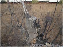 120312-1枯木