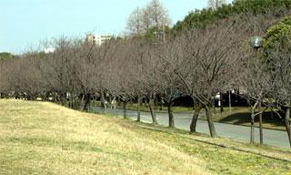 20070326-1.jpg