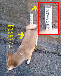 20070530-1.jpg