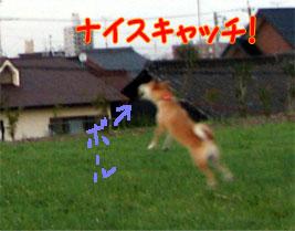 20070918-2.jpg