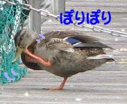 20070927-4.jpg