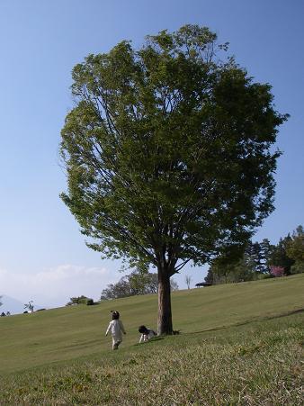 この~木何の木、気になる木ぃ~