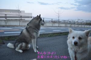 04.06散歩3