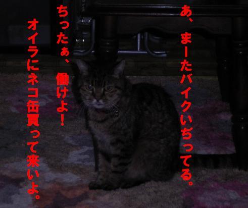 20061018204532.jpg