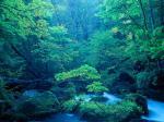 森の写真2