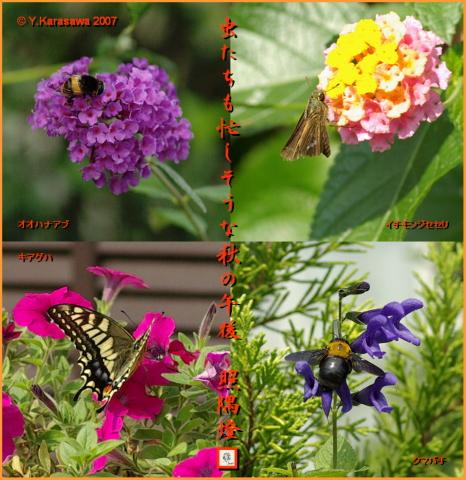 1009昆虫4種