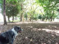0819散歩1