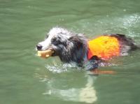 泳ぐSandy0805