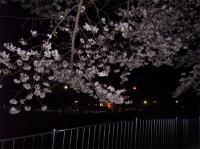 070329夜桜