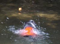 070819泳ぐSandy