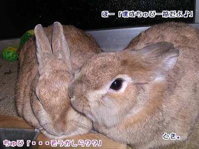 20040129saiappu.jpg