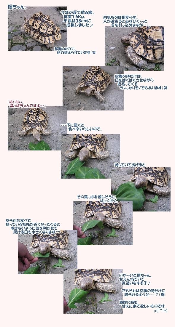 hukuoyatu0710.jpg