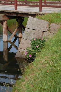 お堀に咲く花