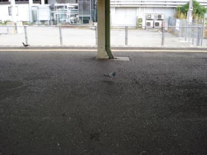 鳩、鳩~♪