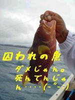 囚われの魚