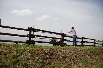 牛を見る人。
