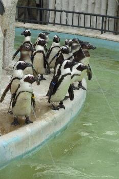 ペンギンちゃん。