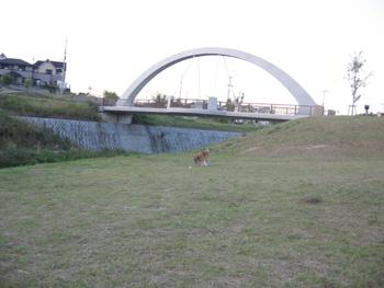 c2133.jpg