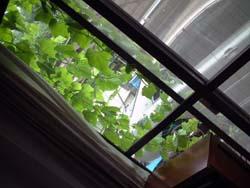 greeneco01.jpg