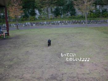20061009010418.jpg