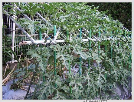 2007棚づくり吊るし栽培