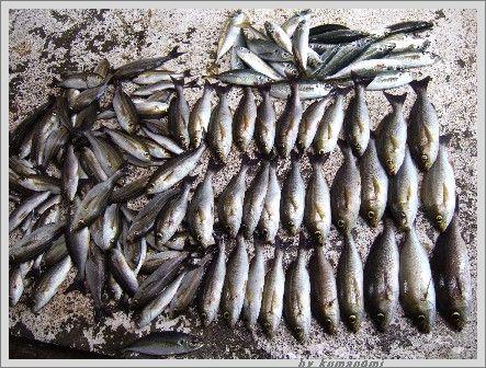 2007 イサギ釣り納め