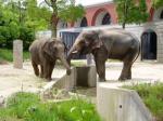 ズーラシアには三頭の象が住む