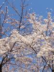 shiratori02.jpg