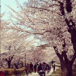 shiratori03.jpg