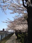 shiratori05.jpg
