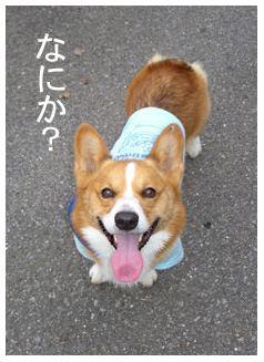 oyanokokoro.jpg