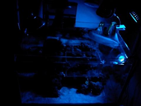 青色LED点灯