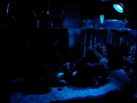 夜の水槽(070930)