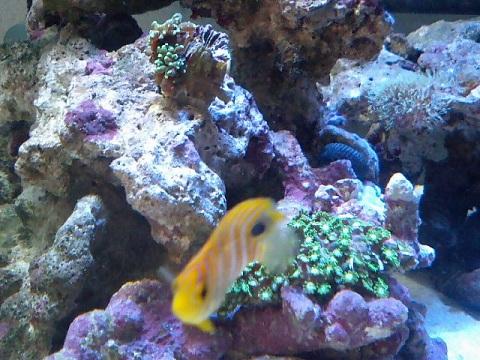 サンゴ+ニシキ071029