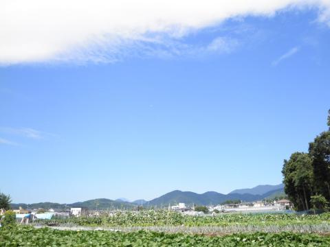 夏の青空05
