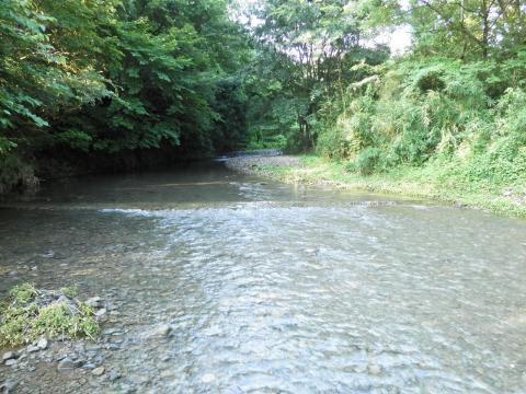 夏の葛葉川23