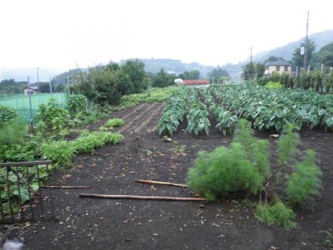 野菜畑17