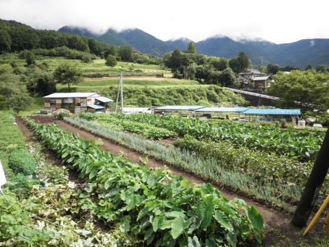 野菜畑09