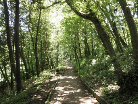 緑の遊歩道11