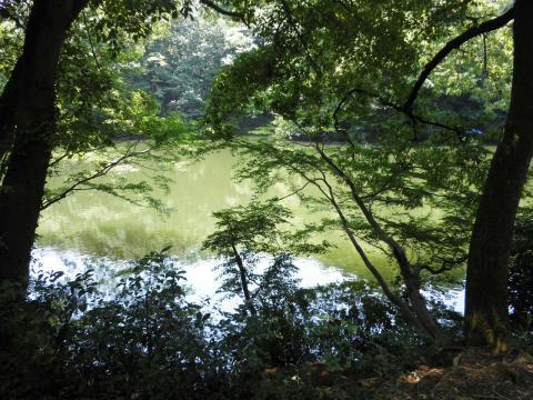 緑の湖畔50