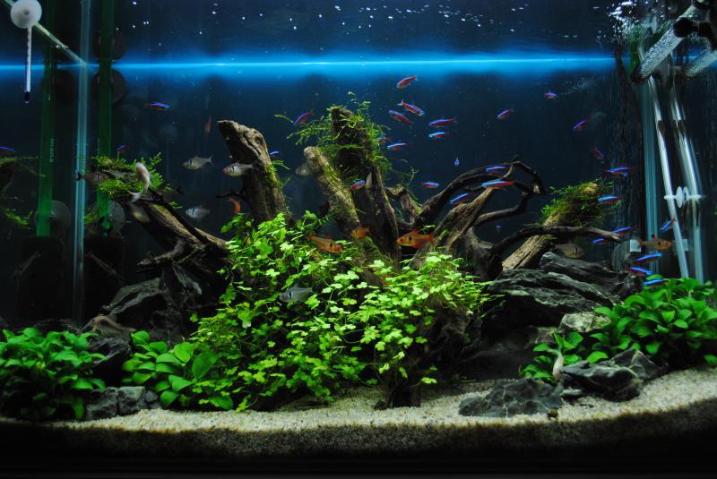 2/4 熱帯魚水槽1