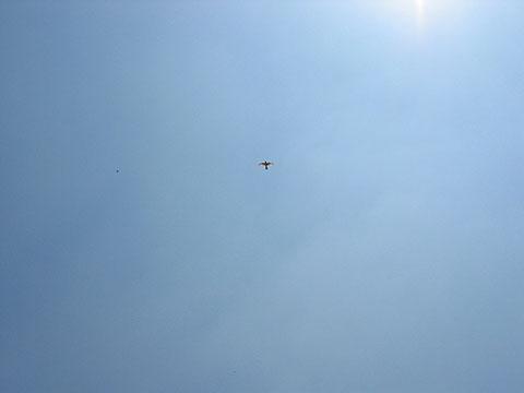 tanis-bird