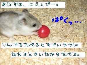 kojyo5.21.1.jpg